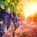46英亩葡萄园出售,叫价$2,490,000